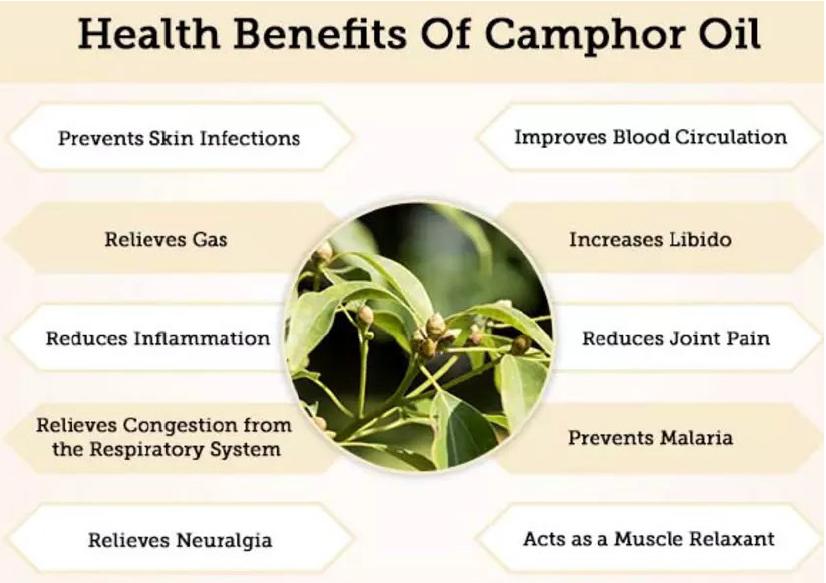 cooling benefits of camphor